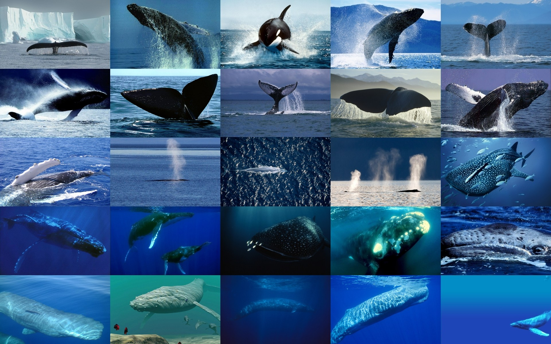 Image baleines - baleine, adorable, cachalot, requin, poisson, océan, mer, bleu, plongeur, orque
