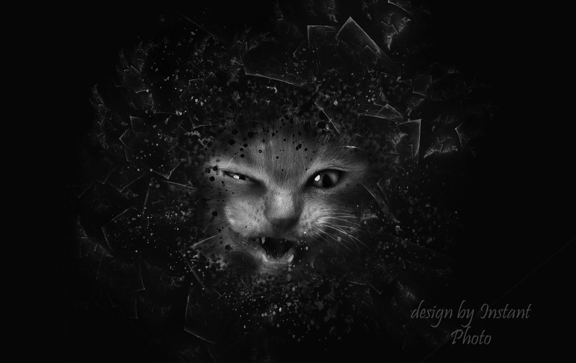 Télécharger Fonds D'écran Dark Cats Gratuitement