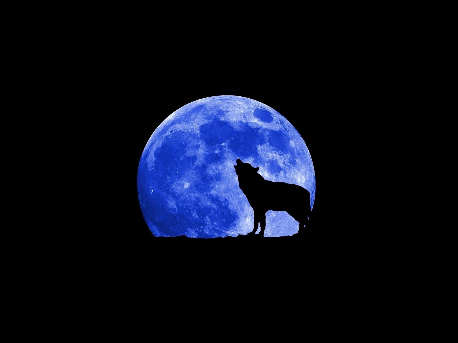 Я хочу... - Страница 15 Wolf-blue-moon.74266