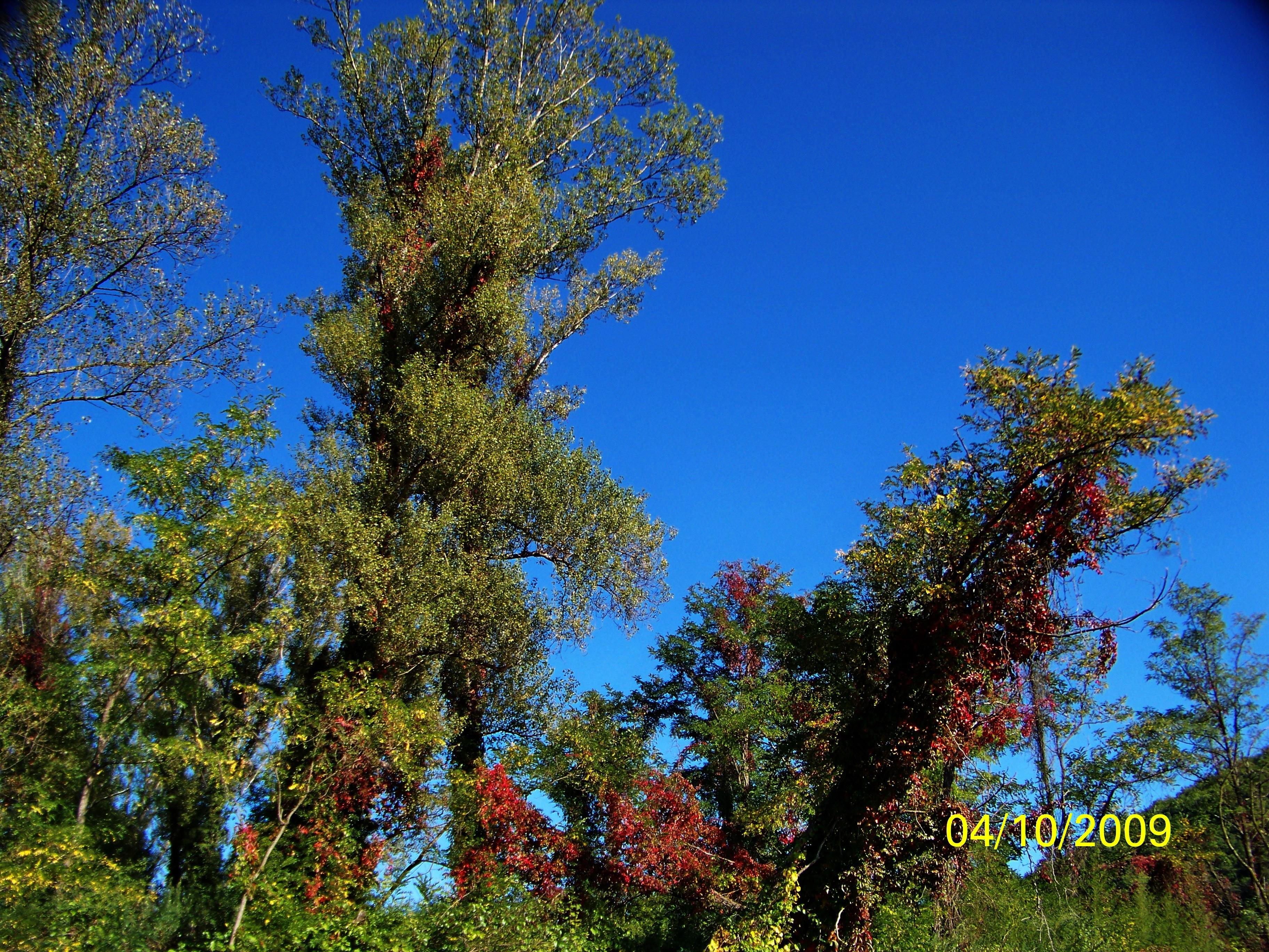 T l charger fonds d 39 cran l 39 automne met ses couleurs gratuitement - L automne et ses couleurs ...