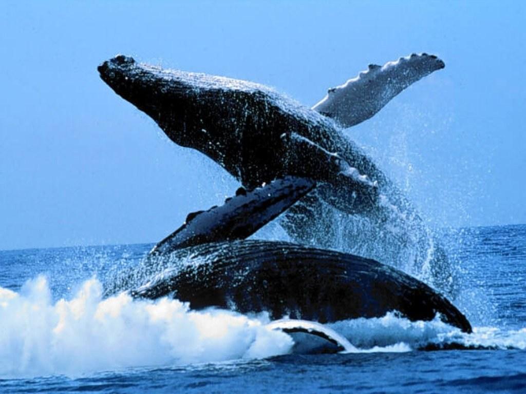 Souvent photos merveilleuses animaux marins SL32