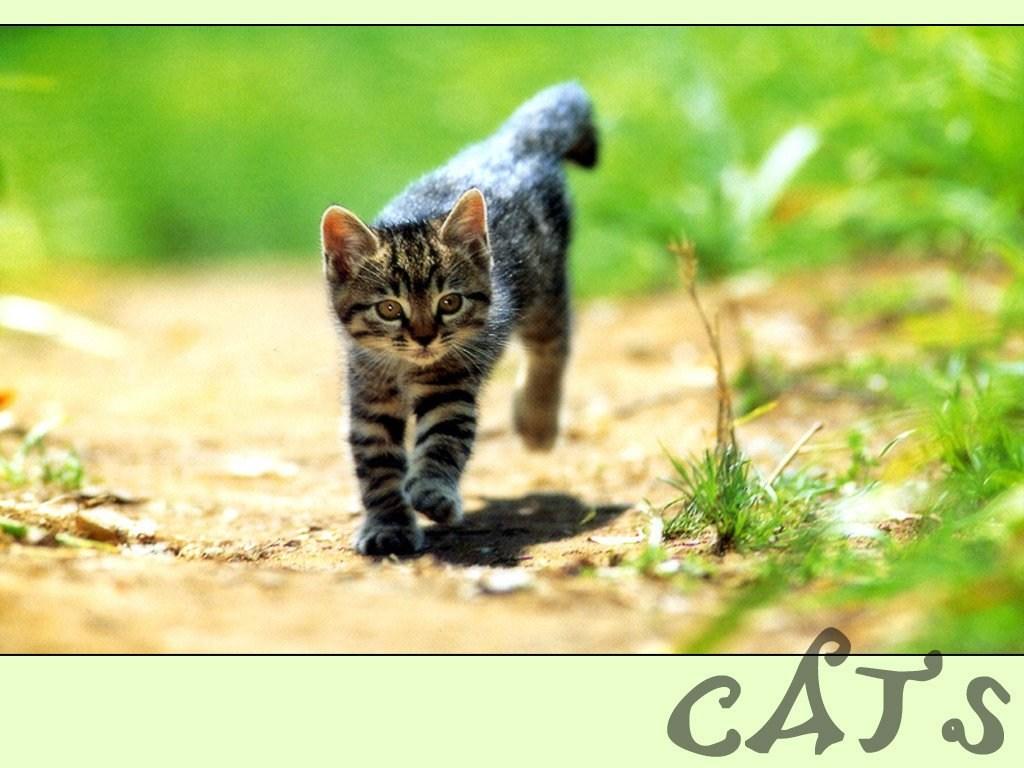 T l charger fonds d 39 cran chat gratuitement for Fond ecran animaux hd