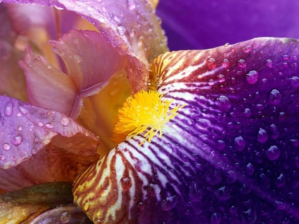 Image fleur nature