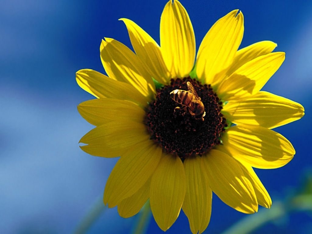 fond dcran fleurs - photo #26