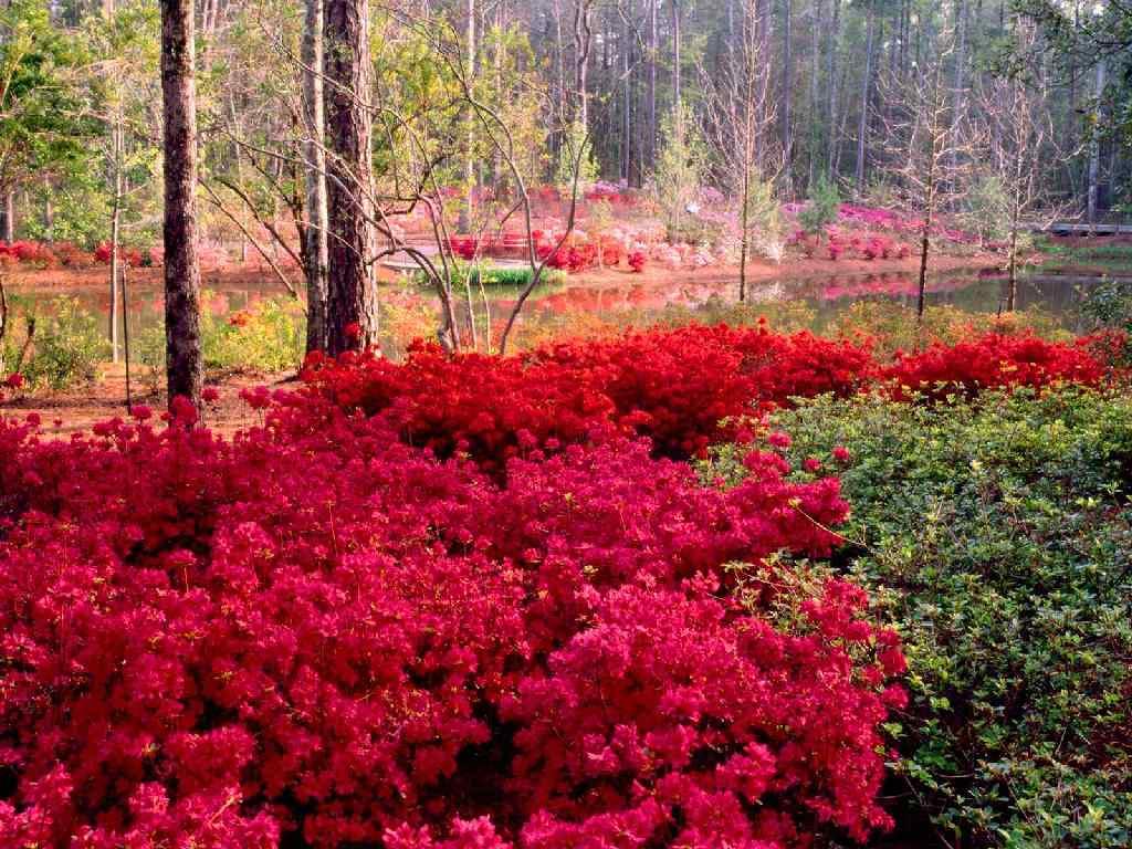 Image paysage fleuri fleurs fleur fleuri fleurir nature
