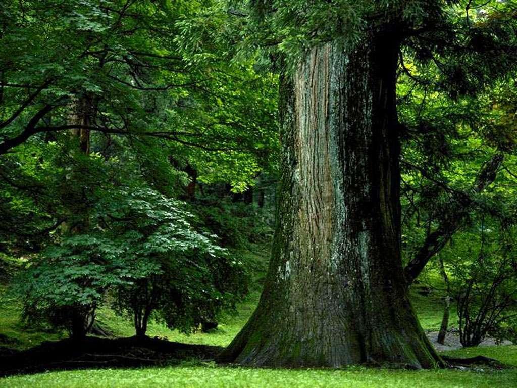 Connu Télécharger fonds d'écran arbre centenaire gratuitement UX75