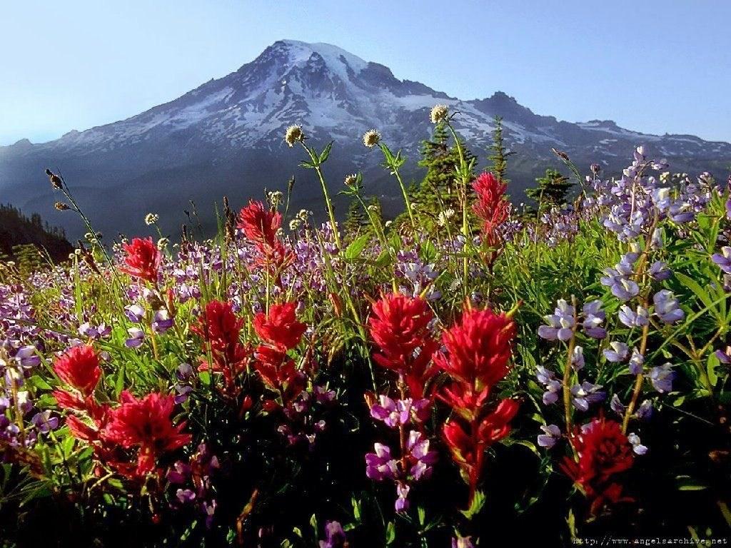 Montagne 65884