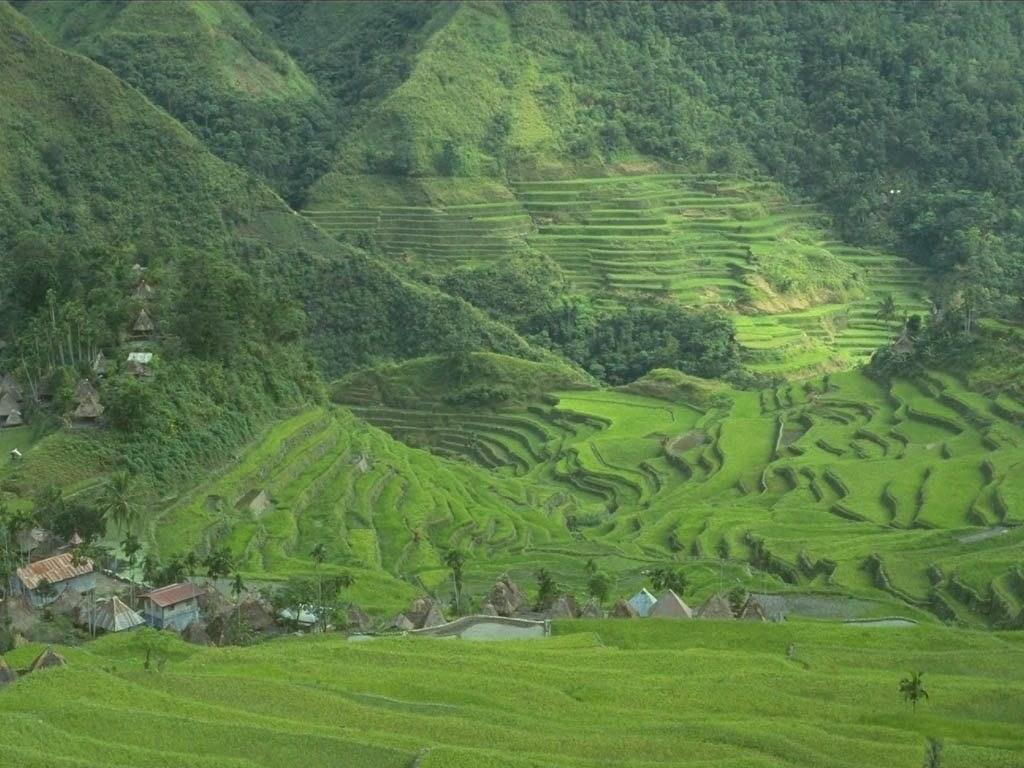 pin paysages montagne fond - photo #34