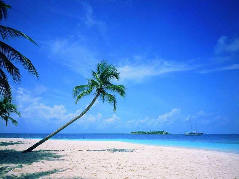 ... ile paradis paradisiaque palmiers palmier plages plage rêves rêve