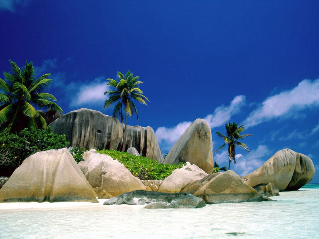 Image plage tropicale - cocotiers cocotier iles ile paradis ...