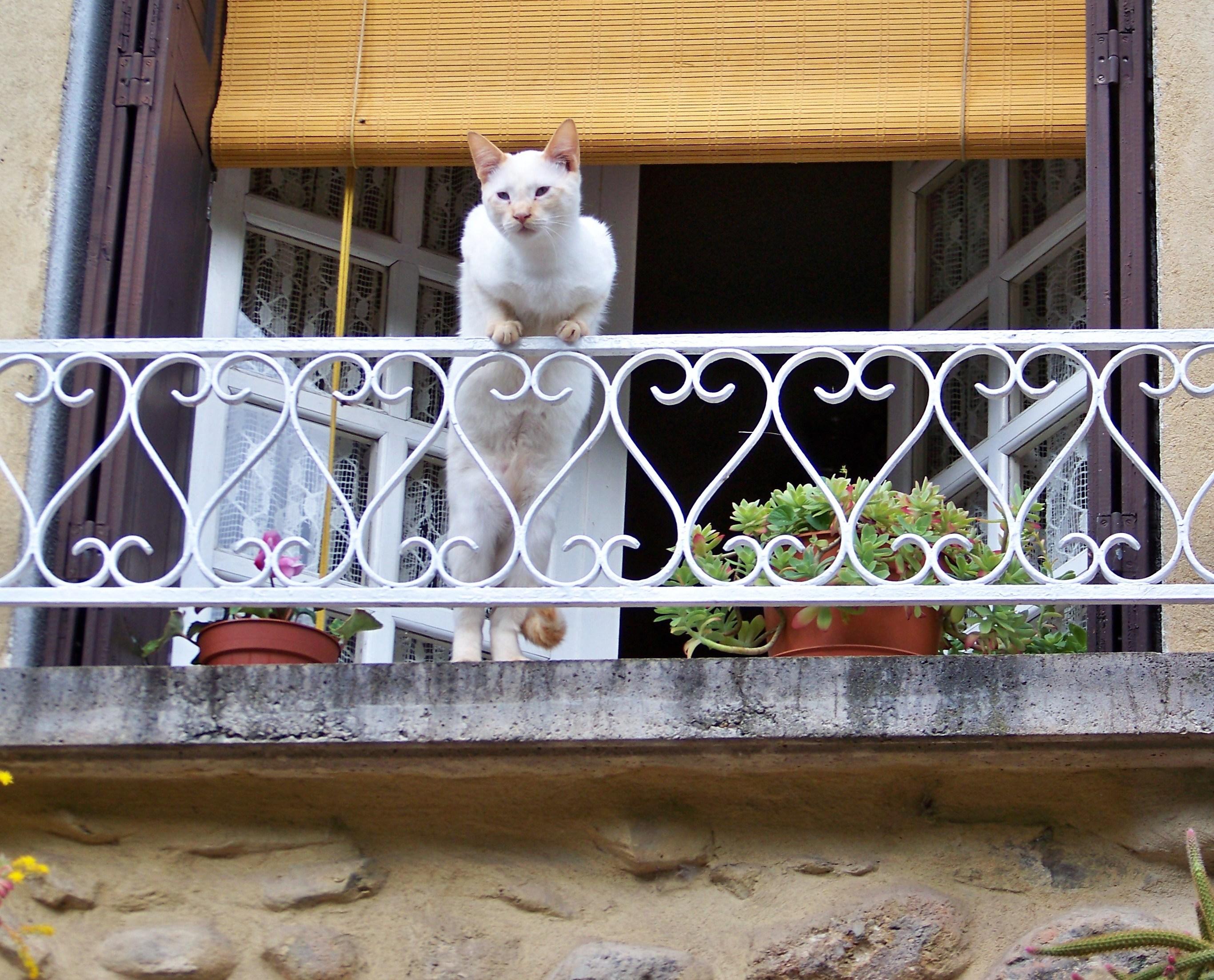 T l charger photos chat la fen tre gratuitement - Grillage fenetre chat ...