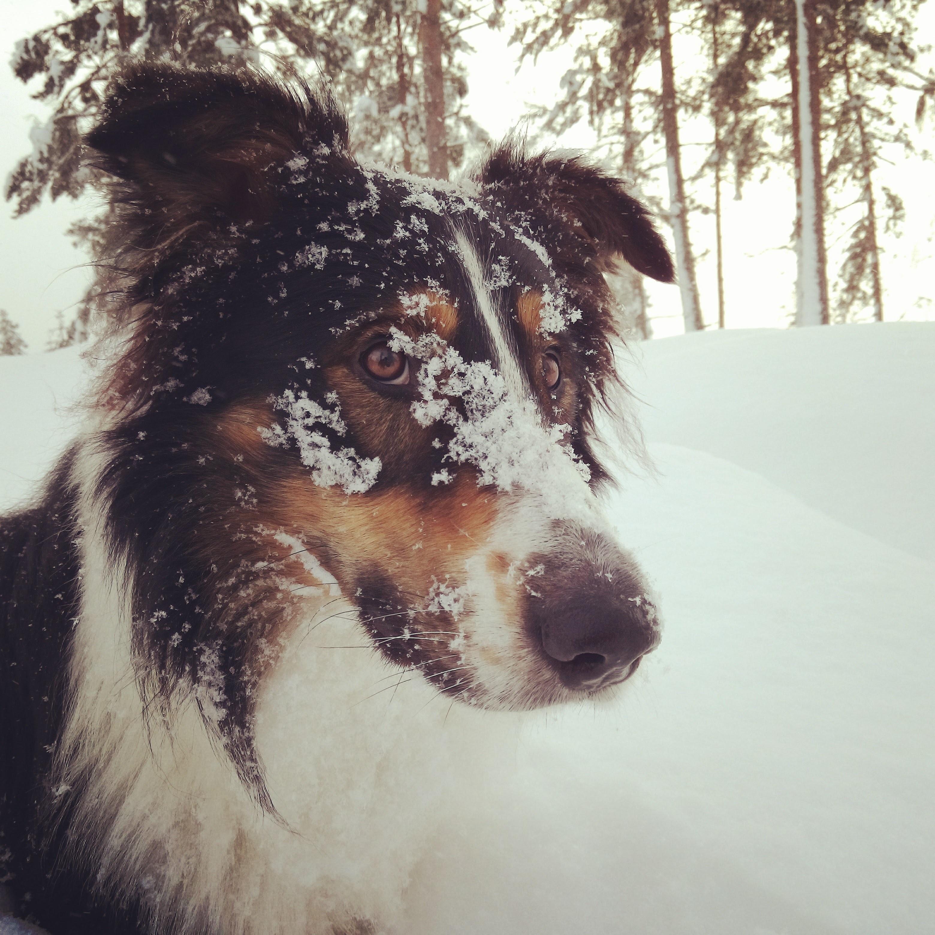 Chien avec neige sur le museau
