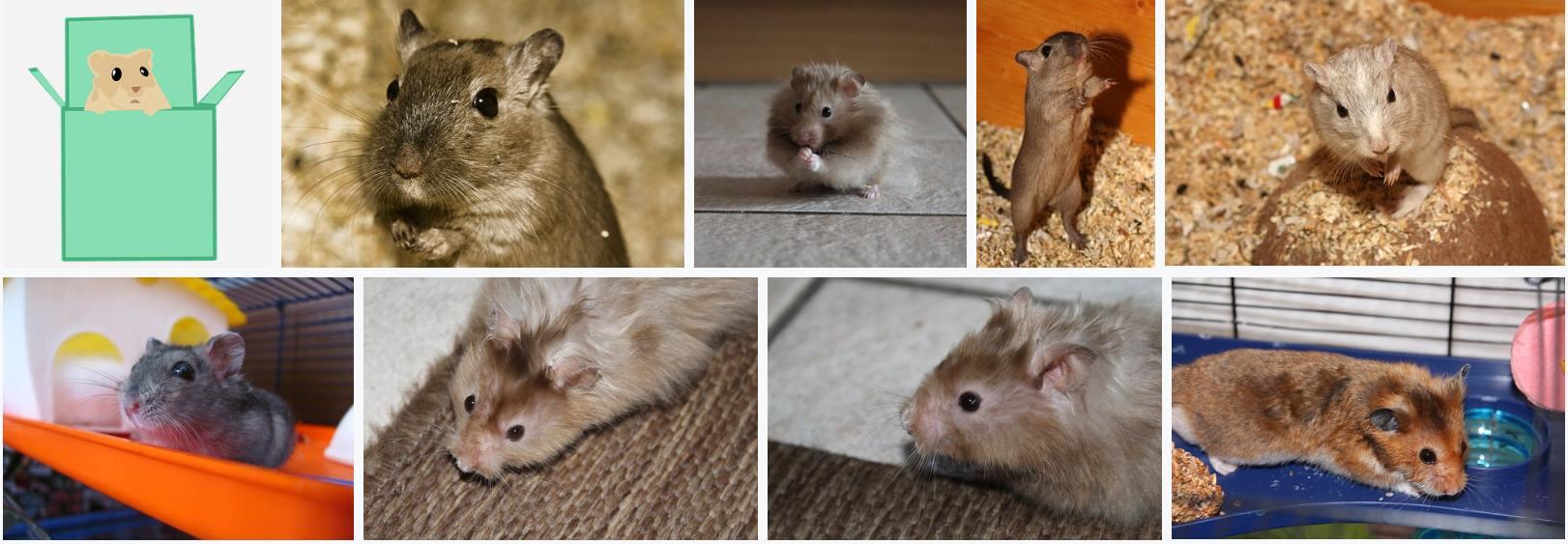 Image composite de X Hamsters