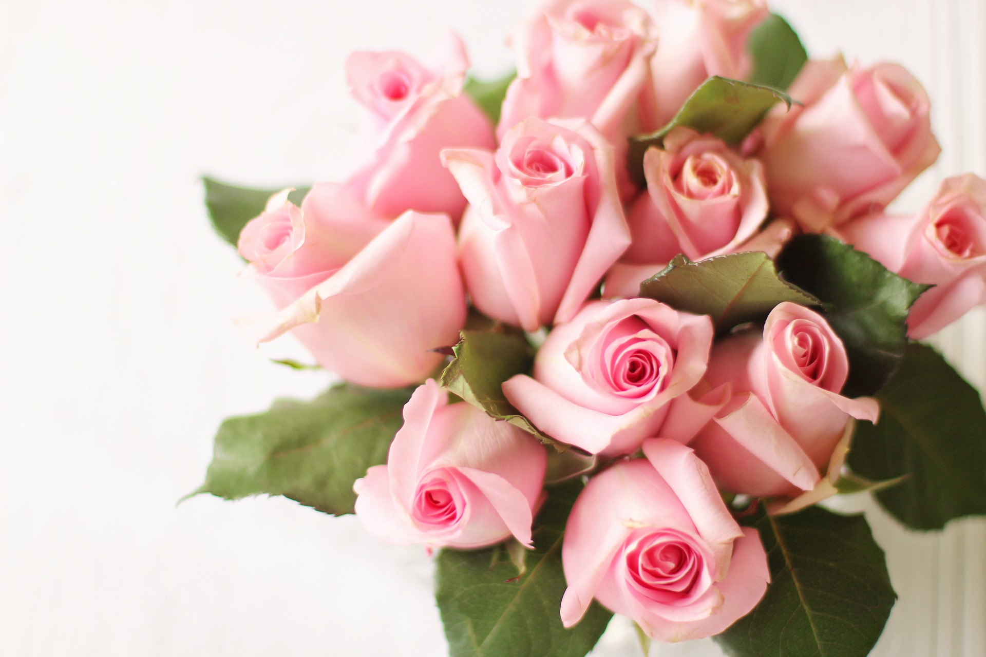Des Roses pour la Saint-Valentin