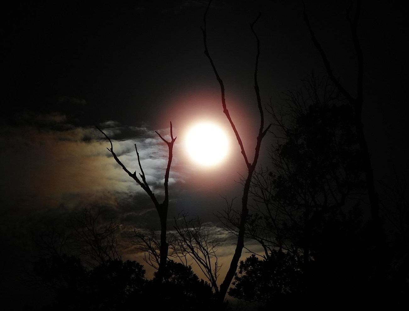 T l charger photos la nuit du loup gratuitement - Bruit dans les combles la nuit ...