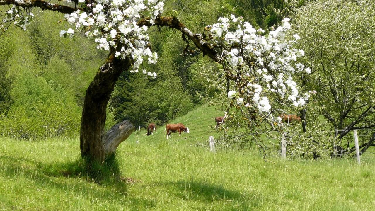 Image printemps en haute-savoie - printemps