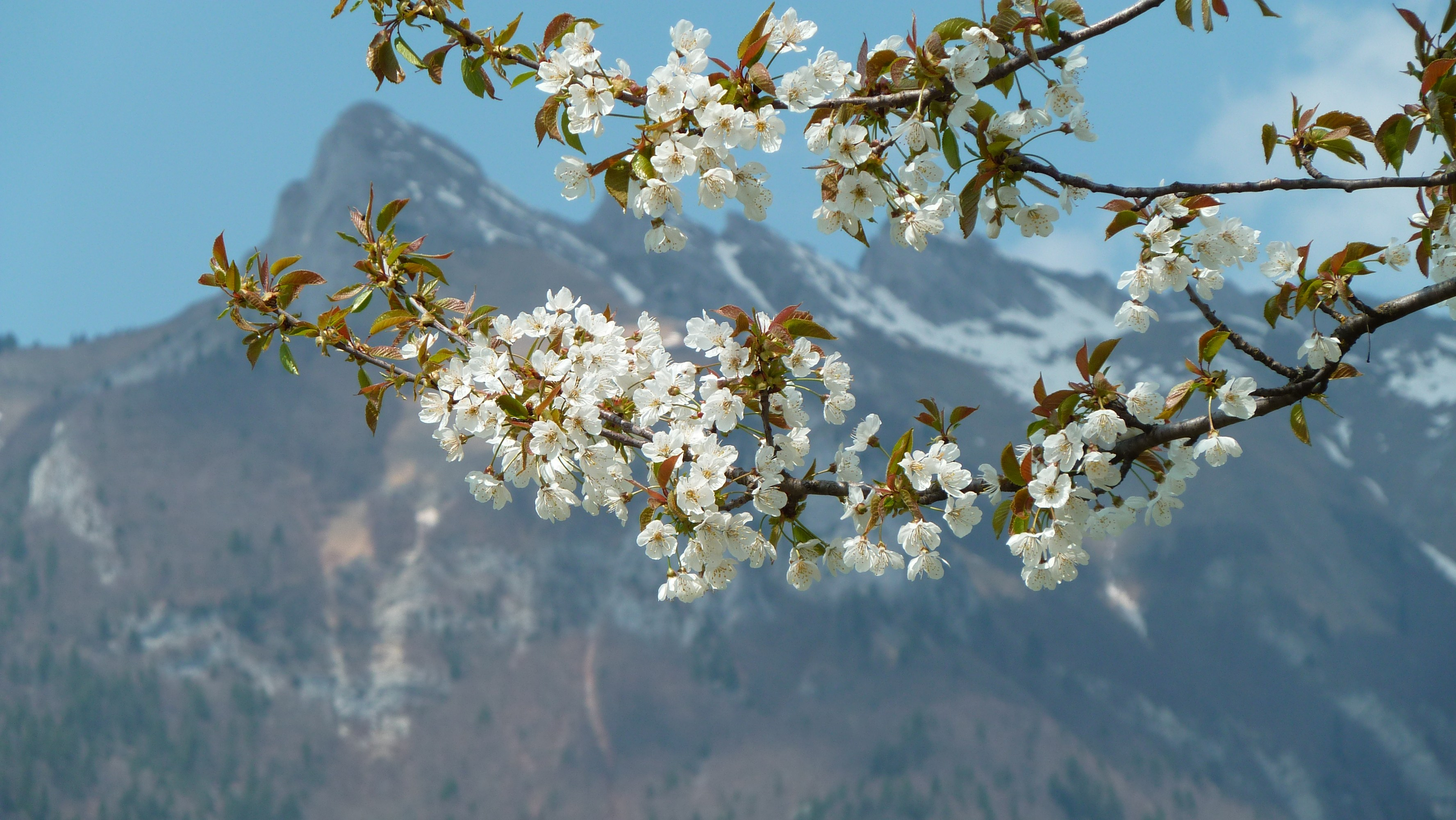 301 moved permanently for Images du printemps gratuites