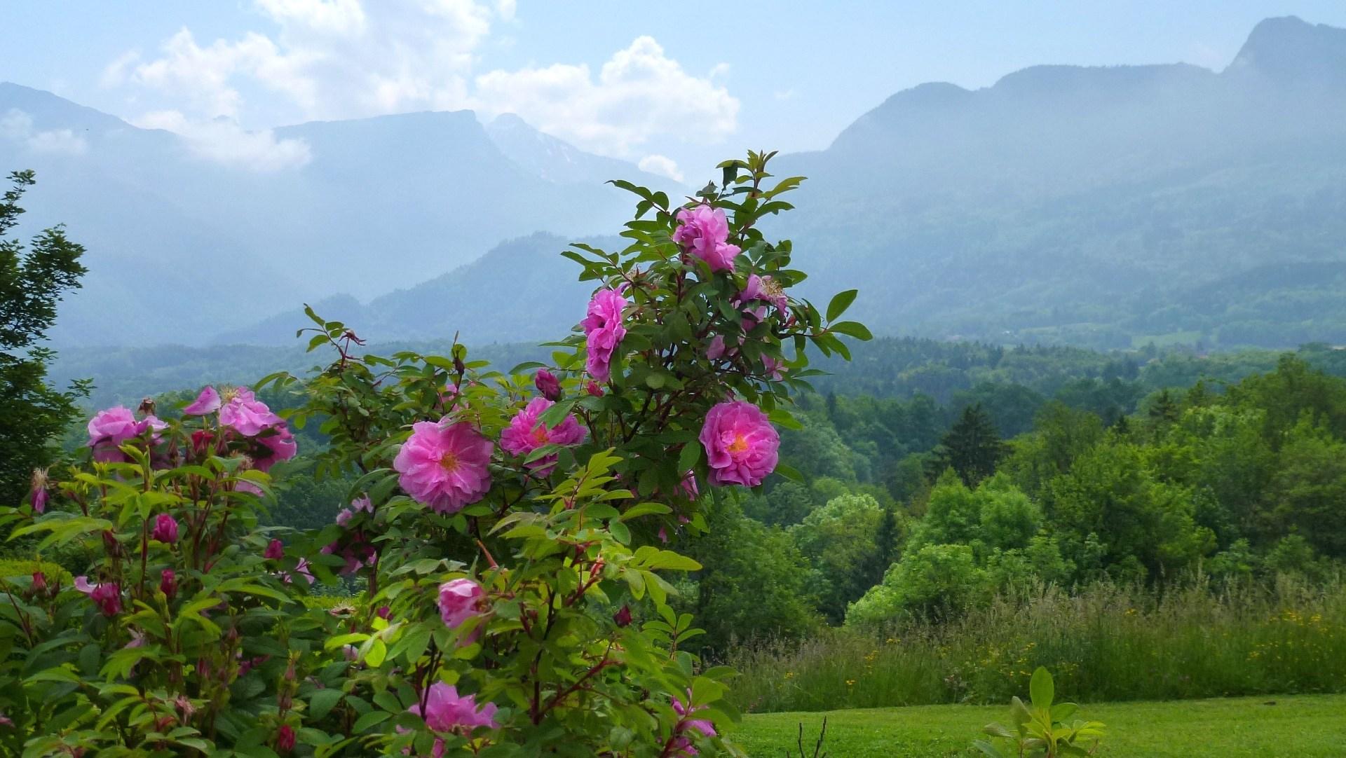 Image printemps for Images du printemps gratuites