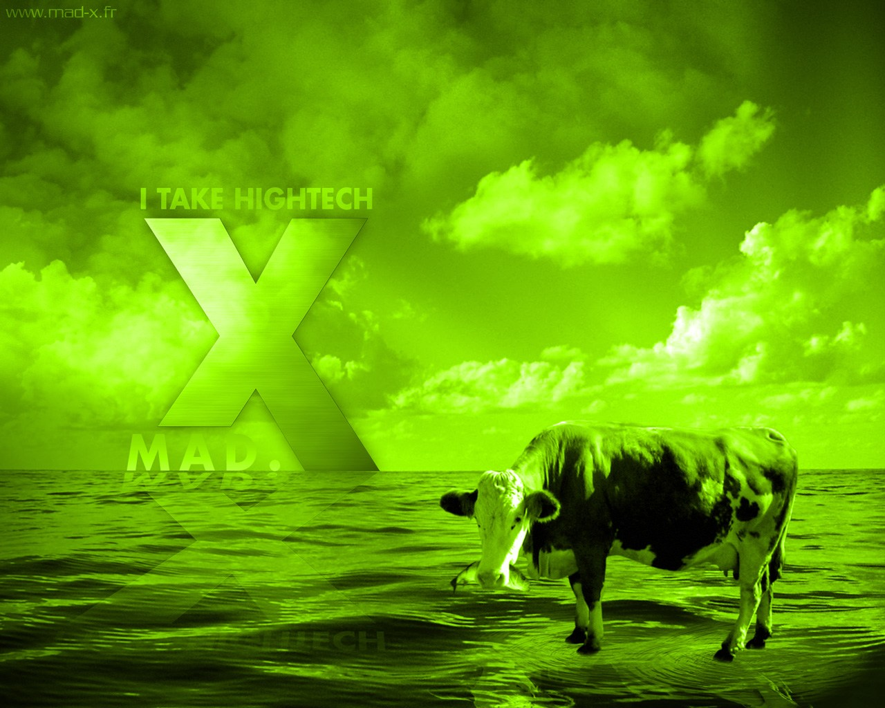 The Mad.X Cow